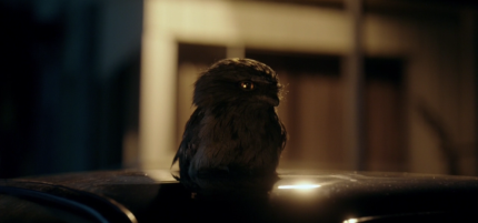 """Showcase's 'The Kettering Incident,' Season 1, Episode 2, """"The Lights."""" An owl"""